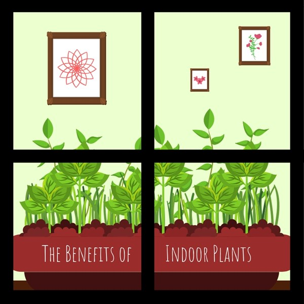 The_Benefits_of_Indoor_Plants